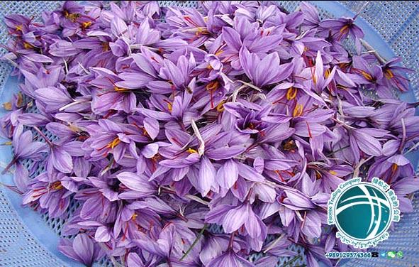 What is Saffron ? , Saffron, SarGol Saffron, Negin saffron, konj Saffron, Coriander Saffron, Saffron Batch, Saffron Flower, Saffron of Iran, Best Saffron, Saffron Import, Saffron export, Saffron Direct Purchase, Documents required for export of saffron, Documents required for import of saffron, Export of saffron, Import of saffron, Best saffron, Iranian saffron, Direct purchase of Iranian saffron, Iran saffron prices, Best Iranian saffron prices, Quality saffron of Iran, Saffron saffron, plant saffron, Saffron, Saffron Prices, Saffron, Saffron Flower, Why Saffron is Expensive, saffron plant, saffron tree, what is saffron used for, saffron uses, saffron price,saffron spice, saffron flower, saffron crocus, Saffron onion,