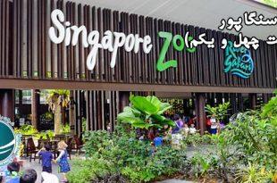 باغ وحش سنگاپور ، گونه های جانوری سنگاپور ، دیدنی ترین باغ وحش های دنیا، گونه های جانوری باغ وحش سنگاپور ، اورانگوتان باغ وحش سنگاپور ، بازدید از باغ وحش سنگاپور، مناطق تفریحی سنگاپور ، پارک تفریحی اسکیب ، کلوب ساحلی مانا مانا، , پارک های روباز سنگاپور ، امکانات پارک تفریحی اسکیب، کلوب ساحلی مانا مانا ، امکانات تفریحی پارک ساحلی مانا مانا، جاذبه های گردشگری سنگاپور، مناطق گردشگری سنگاپور، دیدنی های سنگاپور، پارک آبی وایلد وایلدوت سنگاپور ، بزرگترین پارک آبی سنگاپور، امکانات تفریحی پارک آبی وایلد وایلدوت، پارک های آبی سنگاپور، بزرگترین پارک های آبی جهان، جدیدترین پارک آبی سنگاپور، مجسمه مرلاین نماد سنگاپور ، پارک مرلاین سنگاپور ، نام قدیمی سنگاپور، پارک مرلاین، خلیج مارینا ، پارک های سنگاپور، مناطق تفریحی سنگاپور ، پارک تفریحی اسکیب ، کلوب ساحلی مانا مانا، , پارک های روباز سنگاپور ، امکانات پارک تفریحی اسکیب، کلوب ساحلی مانا مانا ، امکانات تفریحی پارک ساحلی مانا مانا، جاذبه های گردشگری سنگاپور، مناطق گردشگری سنگاپور، دیدنی های سنگاپور، پارک آبی وایلد وایلدوت سنگاپور ، بزرگترین پارک آبی سنگاپور، امکانات تفریحی پارک آبی وایلد وایلدوت، پارک های آبی سنگاپور، بزرگترین پارک های آبی جهان، جدیدترین پارک آبی سنگاپور، مجسمه مرلاین نماد سنگاپور ، پارک مرلاین سنگاپور ، نام قدیمی سنگاپور، پارک مرلاین، خلیج مارینا ، پارک های سنگاپور، پارک آبی وایلد وایلدوت سنگاپور ، بزرگترین پارک آبی سنگاپور، امکانات تفریحی پارک آبی وایلد وایلدوت، پارک های آبی سنگاپور، بزرگترین پارک های آبی جهان، جدیدترین پارک آبی سنگاپور، مجسمه مرلاین نماد سنگاپور ، پارک مرلاین سنگاپور ، نام قدیمی سنگاپور، پارک مرلاین، خلیج مارینا ، پارک های سنگاپور، مجسمه مرلاین نماد سنگاپور ، پارک مرلاین سنگاپور ، نام قدیمی سنگاپور، پارک مرلاین، خلیج مارینا ، پارک های سنگاپور، بزرگترین پارک سنگاپور , پارک ساحل شرقی ، پارک های سنگاپور، بزرگترین پارک های سنگاپور، غذاهای سنگاپور، امکانات تفریحی پارک ساحل شرقی سنگاپور، خلیج شرقی سنگاپور، خلیج مرکزی سنگاپور، جاذبه های طبیعی پارک های سنگاپور، مناطق توریستی سنگاپور، دیدنی های سنگاپور، مناطق دیدنی سنگاپور، جاذبه های گردشگری سنگاپور، پارک های سنگاپور، پارک ها و شهربازی های سنگاپور، بناه