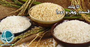 جایگاه برنج در تایلند ، مراسم کاشت و مصرف برنج در تایلند، گرامیداشت مادر برنج، جایگاه برنج در تایلند، برنج تایلندی، دروی برنج در تایلند، مراسم دروی برنج در تایلند، غذاهای تند تایلند ، محبوبترین غذاهای تایی ، غذاهای تایی، افزودنی های غذایی رایج در تایلند، غذاهای تایی ،ادویه های معروف تایلند، غذاهای تایی معروف، علف لیمو ، مواد غذایی تایی، صنایع دستی تایلند ، عروسک گردانی در تایلند، صنایع دستی تایی، صنایع دستی تایلند، بافت صنایع دستی در تایلند، صنعت لاک کاری در تایلند، لاک کاری در تایلند، صنایع دستی معروف تایلند، صنایع دستی مهم تایلند، هنر در تایلند، نمایش سایه های عروسکی در تایلند،عروسک گردانی در تایلند، عروسک های خیمه شب بازی تایی، موسیقی در تایلند ، جشنواره های تایلند ، موسیقی تایی، موسیقی کلاسیک تایی، موسیقی فولکلوریک تایی، آلت موسیقی خائن، آشنایی با سازهای موسیقی تایلند، کارابائو، جشن های چیانگ مای، جشنواره لوی کرا تهونگ تایلند، جشنواره های تایلند، هنرهای نمایشی تایلند ، نمایش و داستان راماکی و لاکهون، نمایش های تایلند ، هنرهای نمایشی در تایلند، لاکهون، نمایش های لاکهون، راماکین ، داستان فولکولوریک تایی، کمون، نمایش های کمون ، نمایش لی - خه، پیکر تراشی تایی ، مجسمه سازی بوداییان در تایلند ، پیکره های برنزی بوداییان، مجسمه سازی در تایلند، تصاویر بودا در تایلند، آثار مجسمه سازی در تایلند، هنر بودایی ، مجسمه های بودا، مجسمه های بودا در تایلند، هنرهای معاصر تایی، هنر تصویرسازی در تایلند، نقاشی دیواری در معابد تایلند، نقاشی بودا، نمادهای بوداییان ،نمادهای بوداییان در نقاشی های دیواری، نمادهای بودا در دوران خمرها، نمادهای مجسمه بودا، مجسمه های نمادین بودا، نقاشی های بودا، معماری تایلندی ، سبک معماری سنتی و مدرن در تایلند ، ویشوا کارمان معمار هستی ، سبک معماری در تایلند ، سبک های معماری تایلند، معماری تایی در تایلند، استوپا چیست، معماری سنتی تایی ، معماری سنتی تایلندی، معماری مدرن تایلندی، جایگاه معماری در تایلند، آداب و رسوم تایلند ، آداب رفتاری مخصوص تایلند ، سلام کردن در تایلند ، وایی تایلندی، رسوم تایی در تایلند، سانوک در تایلند، آداب رفتاری تایلندی ها، روش سنتی سلام کردن در تایلند، قبایل کوه نشین تایلند ، کشاورزی در قبایل کوه نشین تایلند، سبک زندگی کوه نشینان در تای