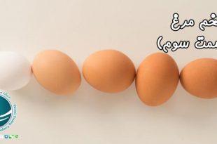 ترکیبات موجود در تخم مرغ ، میزان مصرف مجاز تخم مرغ، مواد موجود در تخم مرغ ، مواد چرب موجود در تخم مرغ، چربی موجود در تخم مرغ، میزان مصرف تخم مرغ، فواید تخم مغ برای بدن، کلسترول موجود در تخم مرغ، کلسترول تخم مرغ، کلسترول خون، عوارض مصرف زیاد تخم مرغ، فواید تخم مرغ ، املاح و ویتامین های تخم مرغ، املاح موجود در تخم مرغ ، املاح مهم تخم مرغ ، فواید تخم مرغ ، آشنایی با خواص تخم مرغ، آشنایی با خواص تخم مرغ ، منابع غذایی موجود در تخم مرغ، تخم مرغ و خواص آن ، خواص تخم مرغ ، منابع غذایی موجود در تخم مرغ، پروتئین موجود در تخم مرغ، اسیدآمینه موجود در تخم مرغ، ارزش پروتئینی تخم مرغ ، ویتامین های موجود در تخم مرغ ، ارزش غذایی تخم مرغ، خواص موجود در تخم مرغ ، واردات از چین، خرید از چین، واردات کالا از چین، واردات کالا، حمل و نقل بین المللی، حمل بار از چین، ثبت سفارش کالا، شرکت بازرگانی فیروزه، شرکت بازرگانی در مشهد،