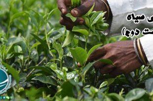 کشف چای,چای,چای سیاه, چای سبز,چای سیاه چیست,فواید نوشیدن چای سیاه,خواص چای سیاه,چای سبز بهتر است یا چای سیاه,مهمترین خواص چای سیاه,مضرات چای سیاه, خواص شگفت انگیز چای,انواع چای,خرید چای,چای مرغوب,خصوصیات چای مرغوب,تشخیص چای مرغوب,خاستگاه گیاه چای,محبوب ترین نوشیدنی دنیا,چای دبش,گیاه کاملیا,کشف چای,سابقه مصرف چای در ایران,جایگاه چای در ایران,چای ایران,جایگاه چای ایرانی در دنیا, فرآیند تولید چای,روش رسمی تولید چای,روش ارتدکس,تولید چای روش غیررسمی تولید چای, چای خشک,نحوه صحیح دم کردن چای,طریقه دم کردن چای,چای زوددم,چای دیردم,چای زعفرانی,چای دارچینی,چای زنجبیلی,چای لیمو,فرهنگ چای در ایران, چای نبات